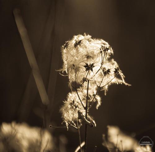 innpflanze web